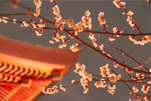 ライトに浮かび上がる梅の花=湯島天神(東京台東区)