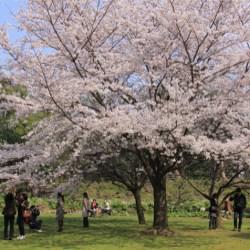 撮影地=東京都江東区・清澄庭園