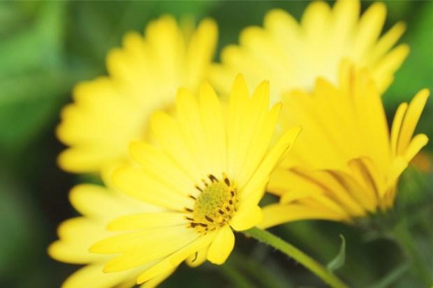 春は花の色も柔らかく優しい。