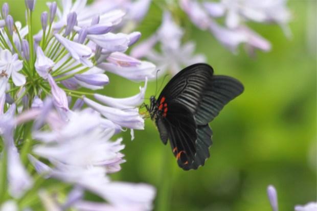 蝶は美しさや若さの象徴