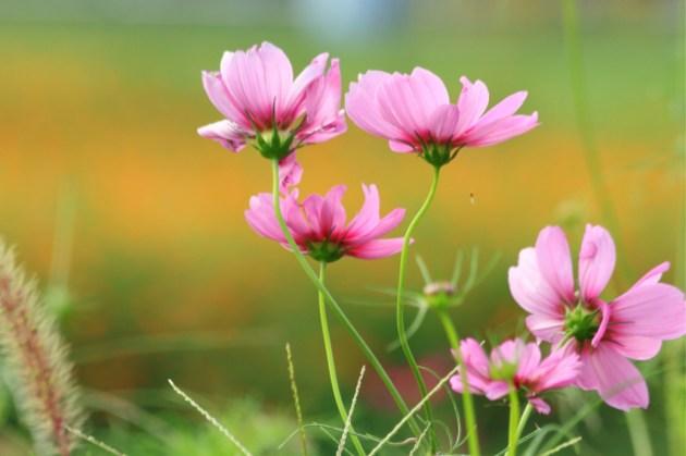 彩り鮮やかなピンク