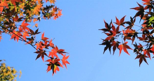 空に抱かれて深まる秋