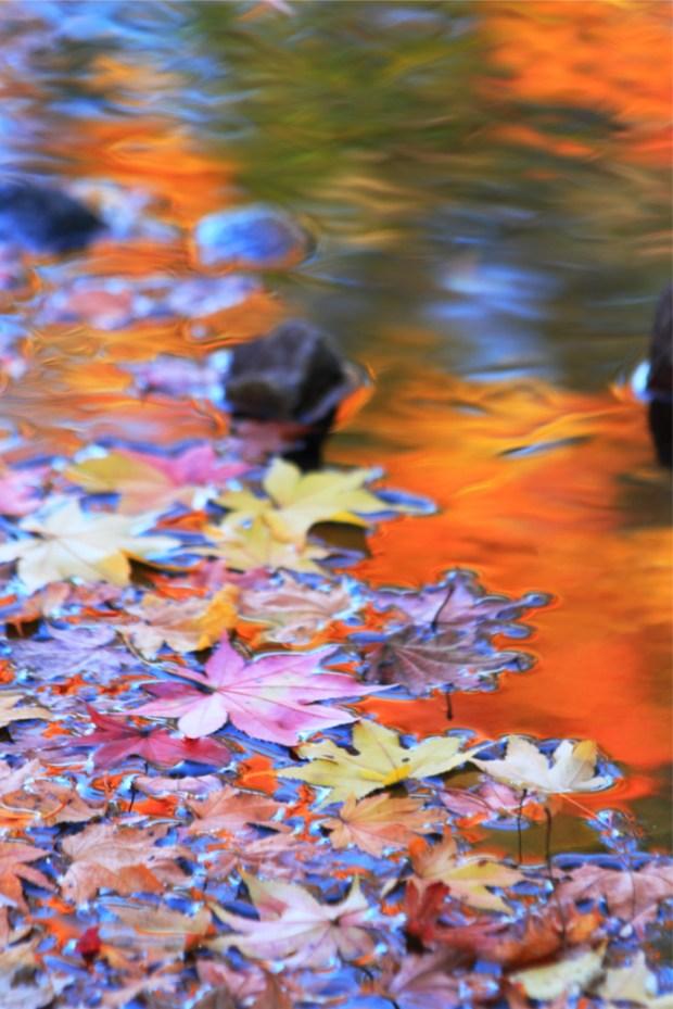 川面に映える秋