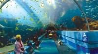Top 10 maiores aquários do mundo
