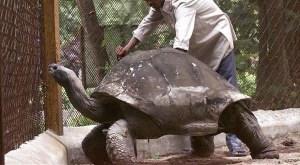 Top 10 animais de vida mais longa do mundo