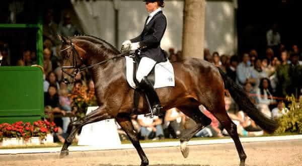 Vedovati Pisos poetin-I-entre-os-melhores-cavalos-do-mundo