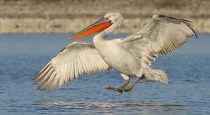 Top 10 maiores espécies de aves do mundo