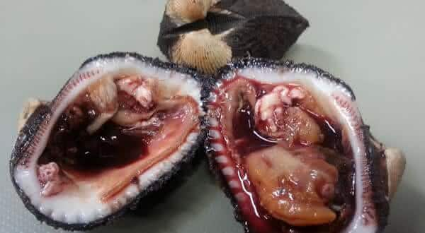 ameijoas de sangue entre os alimentos mais mortais do mundo