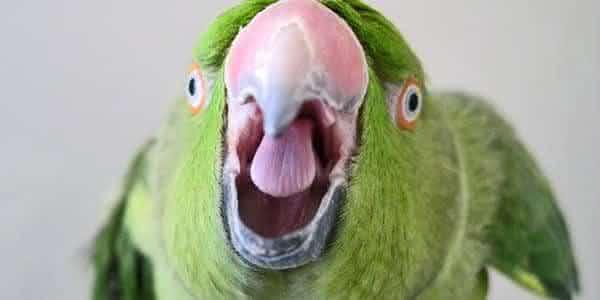 papagaio entre as razoes estupidas para pedir divorcio