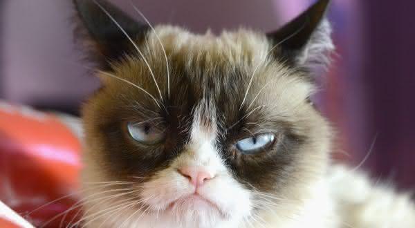 Grumpy Cat  entre os animais mais ricos de todos os tempos