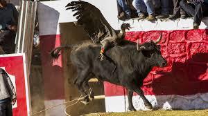 4 Fiestas más crueles en las que son maltratados animales