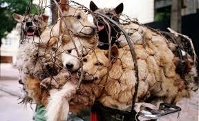 5 Fiestas más crueles en las que son maltratados animales