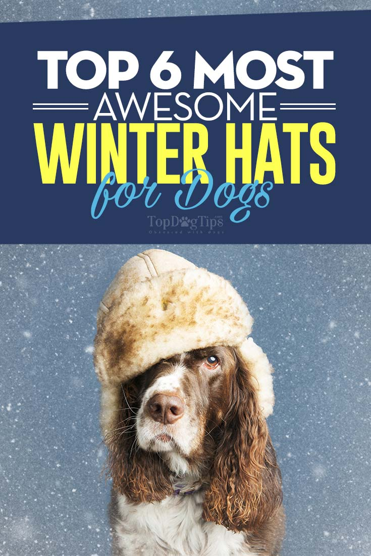 Large Of Dogs Wearing Hats
