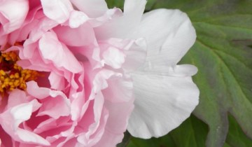 >Top five in bloom this week (May 25 - 31)