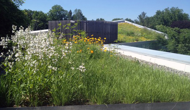 sloping green roof in bloom