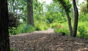 woodland path-small