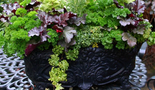 herbcontainerZammit 1