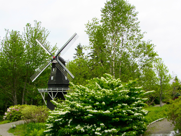 windmill and viburnum