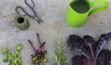 edible drinakable garden 3 Paul Zammit web