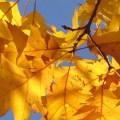 fall autumn colour leaf