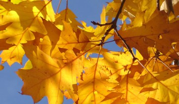 fall autumn colour leaf