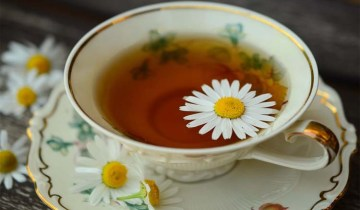 chamomile-feature