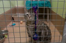 """A volunteer at the Scarborough shelter said more cats come in warmer seasons. She said they call it a """"kitten season."""""""