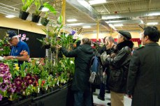 For an $8 cover charge, orchid lovers could view and purchase a wide range of orchids.
