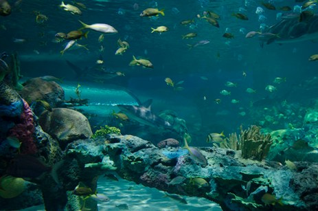 There are over 16 000 animals and marine habitat that can be found at the Aquarium.
