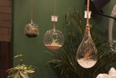 An array of miniature terrariums on display.