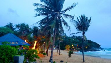 Phuket Thailand Palm Trees