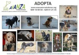 Perros y gatos en adopción