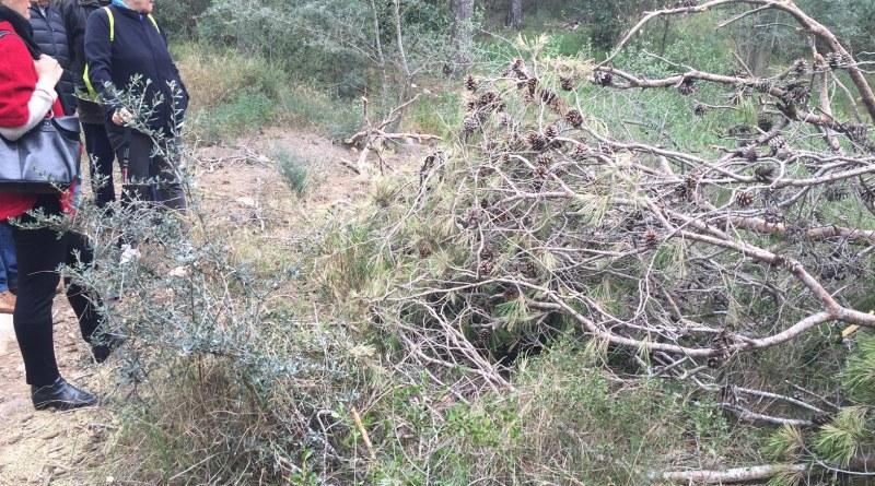 Vecinos del Vedat denuncian el abandono de restos de pinos afectados por tomicus tras la poda