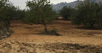 Vecinos del Camí de la Pardala no pueden respirar al haber lodos de depuradora con fines agrícolas junto a sus viviendas