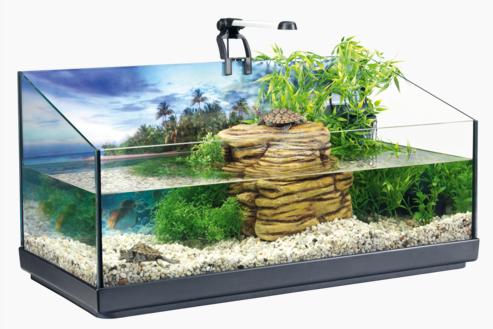 Mantenimiento del acuaterrario para tortugas for Acuario tortugas