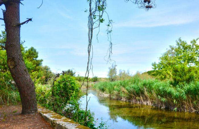 Parco Regionale di Migliarino San Rossore