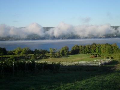 harvest-2012-077; Finger Lakes Wine Alliance