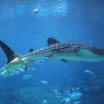 Things To Do: The Georgia Aquarium