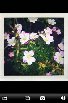 app_photo_shakeitphoto_8.jpg