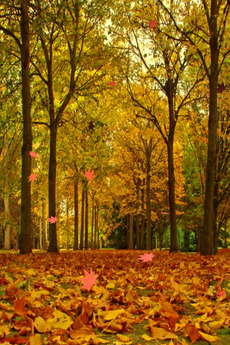 app_ent_autumn_leaves_2.jpg