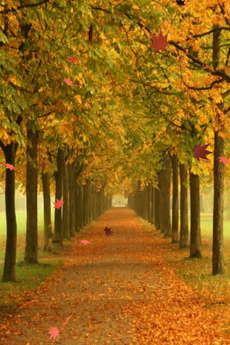 app_ent_autumn_leaves_5.jpg
