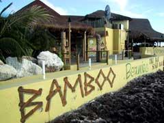 Bamboo_bernies