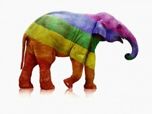 Rainbow-elephant-1