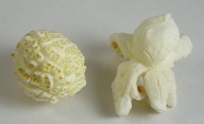 Mushroom ซ้าย butterfly ขวา