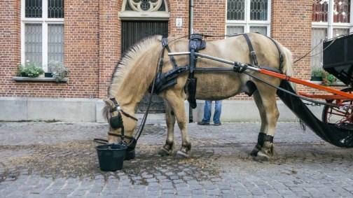 Bruges-31