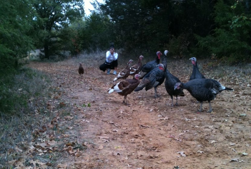 Real Turkeys during a run