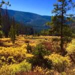 Colorado trail photo