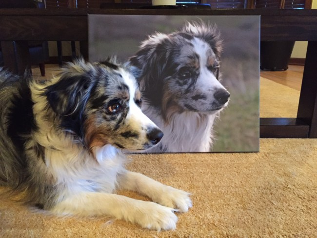 Giant Dog Canvas