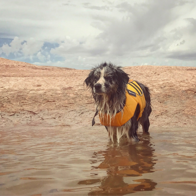 Dog Life Jacket Ruffwear