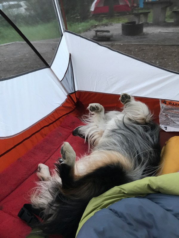 Roo assuming tent sleeping position.
